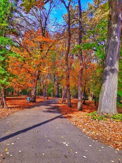 loving every detail Path In Nature Autumn Mood Tree Shadow Sunlight Autumn Multi Colored Fall Leaves Walkway