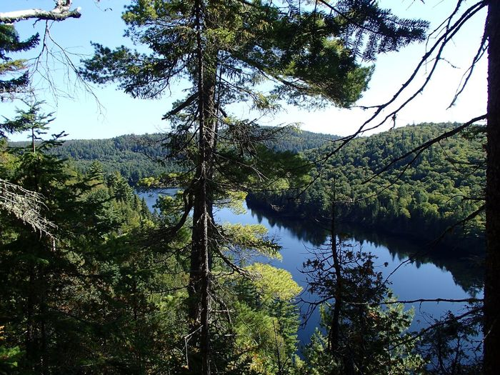 Lac Wapizagonke (Parc national de la Mauricie) Tree Plant Water Tranquility Sky Lake Growth Nature Scenics - Nature Forest Outdoors Coniferous Tree