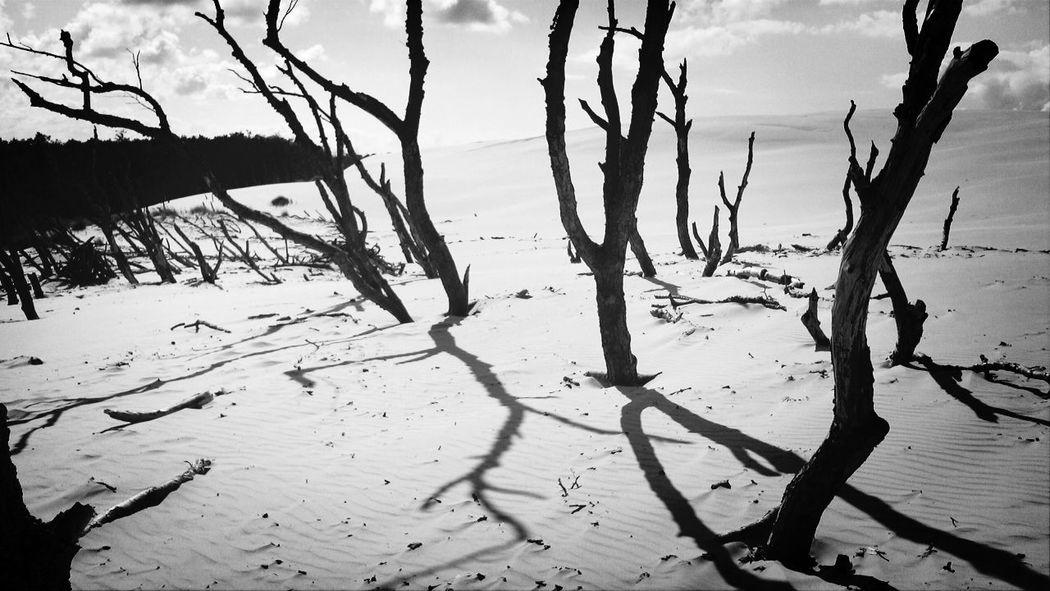 Landscape Słowiński Park Narodowy Urlaub in Łeba und Ausflug zu den Wanderdühnen S/w-Fotografie Black & White