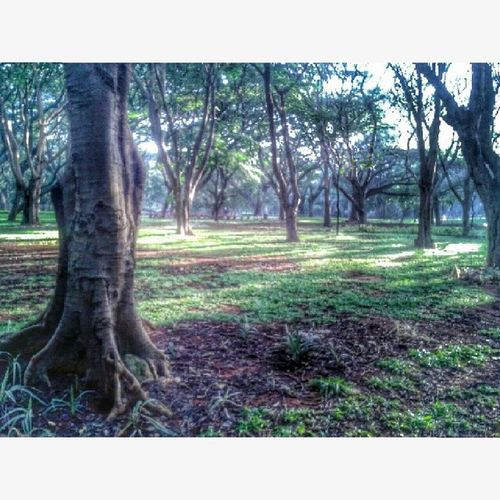 CubbonPark Bangalore Mgroad