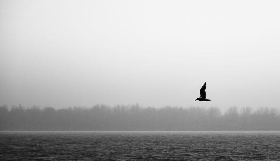 Bird flying over lake against sky
