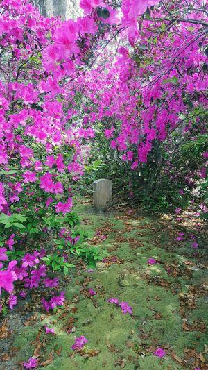 Pink flowering plants on land