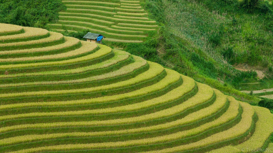 High Angle View Of Rice Terraced Field