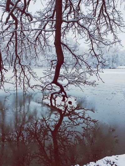 Duck Winter