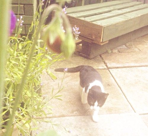 Taking Photo Cat Flowers Out Random Garden Animals Hanging Out Sunny