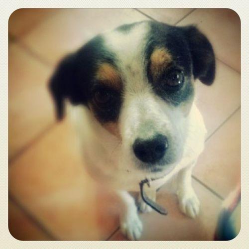 Come faccio a dirgli di NO? Mysweetfriend Puppy Ilovemydog Insta_dog_lover doglife woof