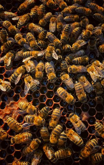 High angle view of bees