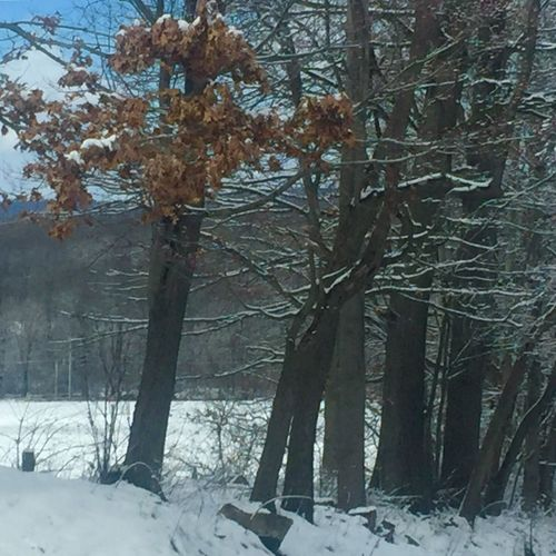 Winter Snow Cold Temperature Tree Nature Beauty In Nature Tranquility Weather Branch Tree Trunk Forest No People Scenics Pennsylvania Chester County Day Tranquil Scene Bare Tree