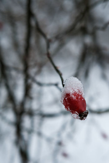 Close-up of frozen strawberry on snow