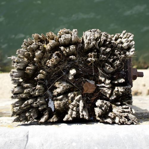 Close-up of a tree stump