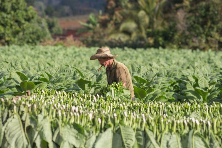 Plant Farmer