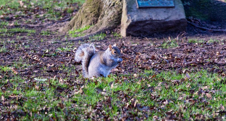 Mammal One Animal Nature Outdoors No People Animals In The Wild Squirrel