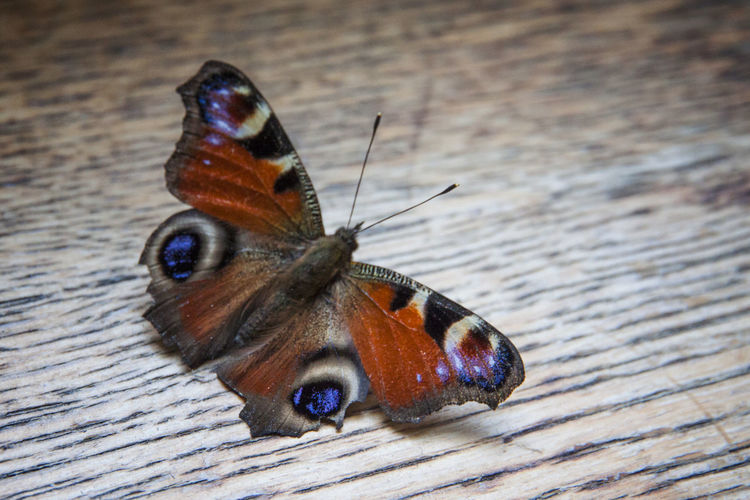 Close-up of butterfly perching