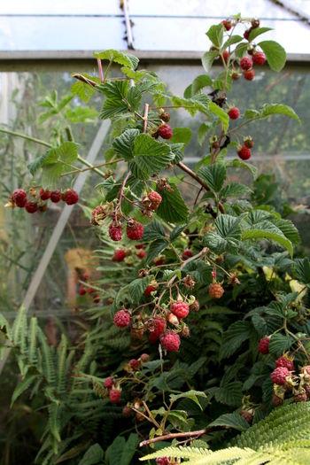 Fruit Growth