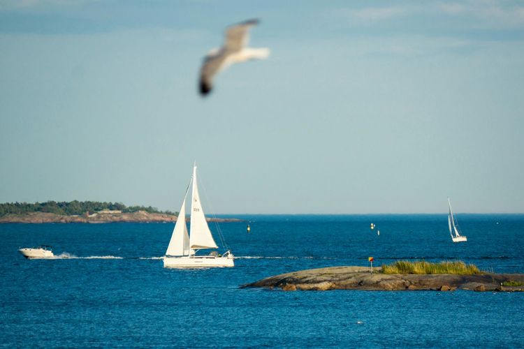 Boat Sailing In Sea With Seagull Flying In Foreground Against Sky