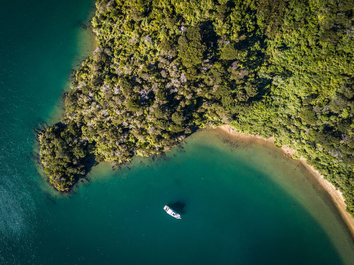 Bay in Marlborough Sound, New Zealand Aerial View Animal Animals In The Wild Beauty In Nature Birdsview Day Green Color High Angle View Lookdown Marine Mavic Pro Nature No People Outdoors Plant Scenics - Nature Sea Swimming Tranquility Turquoise Colored UnderSea Underwater Water