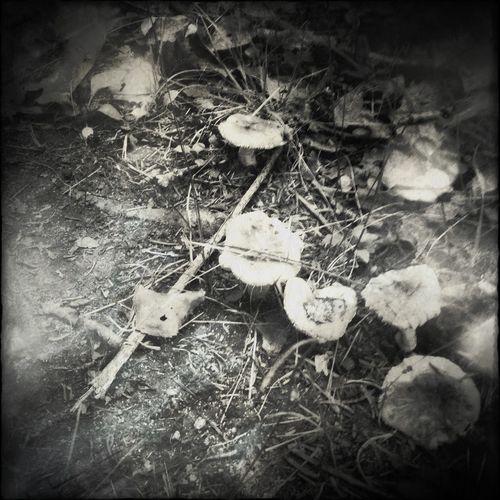 Mushroom Magic Mushrooms EyeEm Nature Lover Black & White