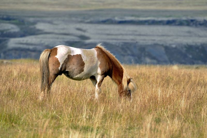 Side view of horse on field