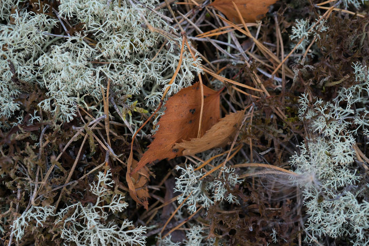 Leaves🌿 Beauty In Nature Close-up Leaves Leaves_collection Moss Nature Outdoors