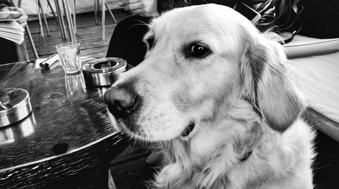 Coffee with Teti. Coffee Bar Morning Storytelling Storyteller Labrador Blackandwhite Mobilephotography Snapseed EyeEmNewHere EyeEm Best Shots Dog Pets Domestic Animals Animal Themes Mammal One Animal Indoors  No People Day Close-up Shades Of Winter