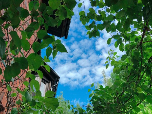 Plant Low Angle View Tree Sky Growth Nature Leaf