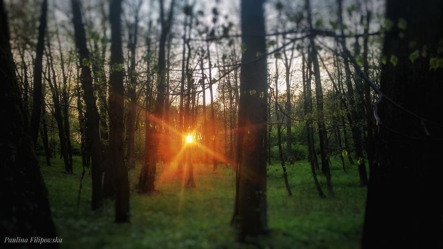 The Great Outdoors - 2017 EyeEm Awards Tree Sunset Nature Forest Tree Trunk Sun Sunlight No People Outdoors Beauty In Nature Scenics Tree Area Sky Day Freshness Trees Are Beautiful Forest Art