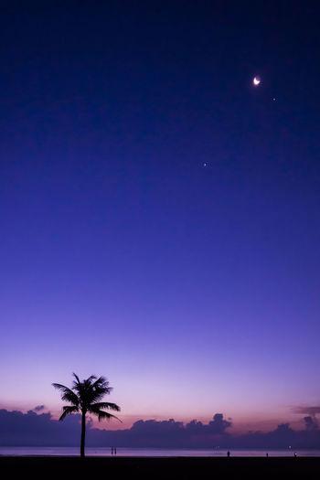 待晓晴空,弧月白星,有风来过,红云方升。 morning Palm Tree Moon Sky Silhouette Night Clear Sky Outdoors Beach