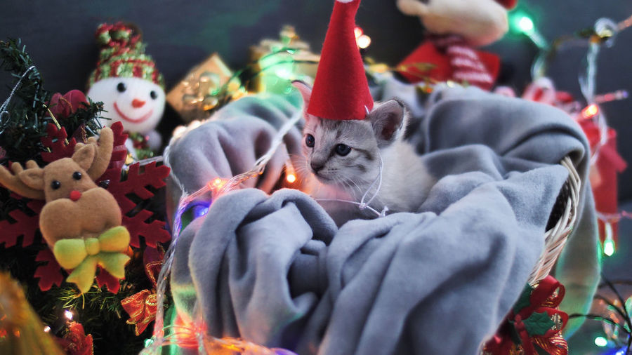 Cute tabby kitten sitting in sheet with Christmas decoration Celebration Animal No People Animal Themes Mammal Holiday Decoration Domestic Animals Christmas Indoors  Art And Craft Representation Focus On Foreground Pets Domestic Christmas Decoration Domestic Cat Cat Vertebrate Kitten