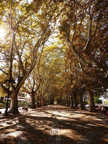 Golden Light Autmn Trees