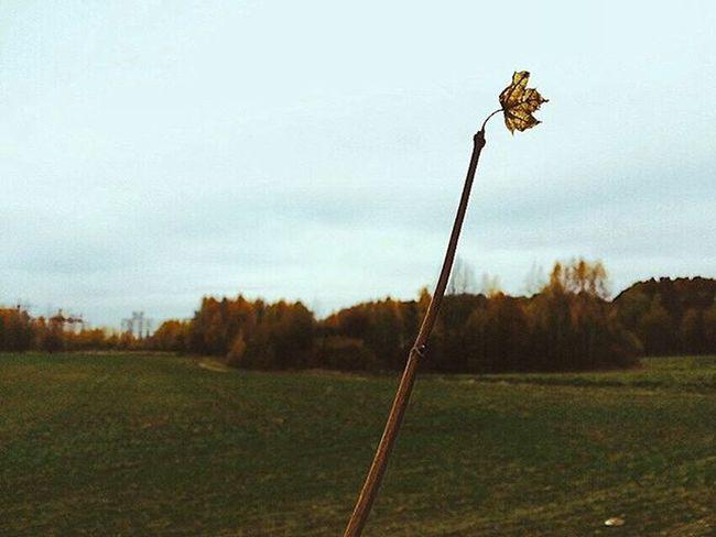 осень Autumn Минск Minsk 🍂November листопад вівторок ноябрь