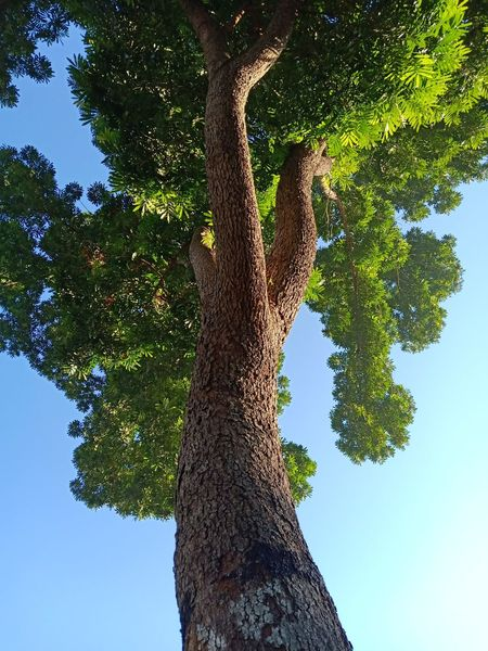 The Life 1 Tree Branch Tree Trunk Forest Tree Area Sky Green Color