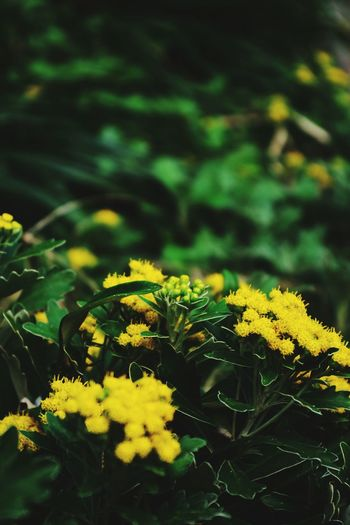 Perspectives On Nature Yellow Nature Plant Green Color Growth Leaf Outdoors Tree Beauty In Nature Plant Part Close-up Flower No People Day Branch Living Organism Vine - Plant Multi Colored Freshness Fragility