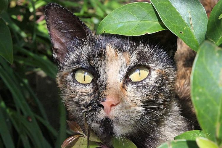 Cat Looking At Camera Close-up Eye Cute Mammal Catsofinstagram Portrait Colourful Stray Cat Leaf Outdoors Green Color Nature Animal Beautiful
