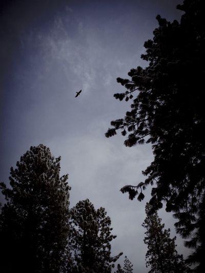 Bird in Flight. Dark Vscocam