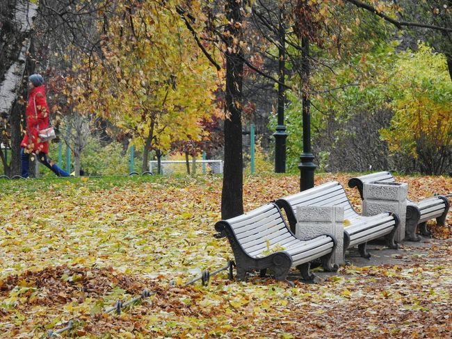 Tree Day Beauty In Nature Autumn Leaf Nature October Travel Destinations Colors Of Autumn Autumn🍁🍁🍁 Fifty Shades Of Yellow Park Nature Tree Tavrichesky Garden City View  Colors Of Sankt-Peterburg Sankt-Petersburg Russia