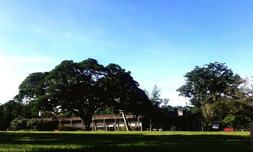 After final's week. @ Freedom Park. Acacia Tree Sky And Trees Buildings UPLB EyeEm Nature Lover Nature On Your Doorstep