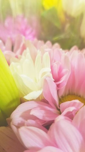 Flower Beauty In Nature Nature Petal Fragility Flower Head Pink Color Freshness Plant Close-up Growth No People Outdoors Biology Day Millennial Pink EyeEmNewHere The Week Of Eyeem Tranquility
