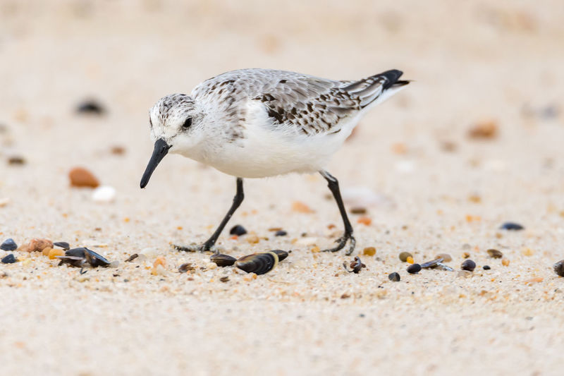 Close-up of seagull on sand