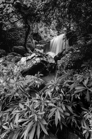 Black and white waterfall Plant Tree Plant Part Nature Growth Forest Leaf Beauty In Nature Day Land Waterfall No People Flowing Water Scenics - Nature Outdoors Tranquility Flowing Motion Water Long Exposure Rainforest