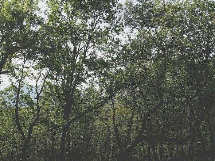 Avellino Campagna ❤️ Nella Pace Dei Sensi
