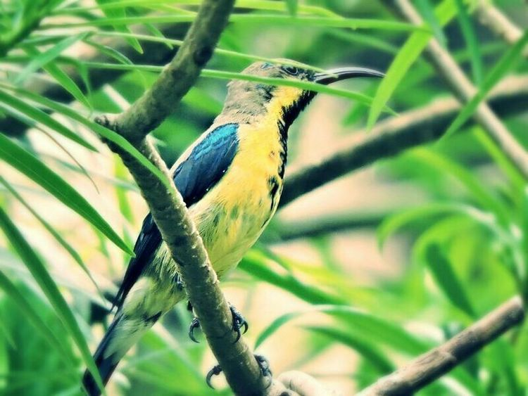 Olive-backed Sunbird EyeEm Birds Bird Photography Birds_collection Birds Of EyeEm  Human Vs Nature Birds_n_branches EyeEm Nature Lover Birds🐦⛅ Nature_collection