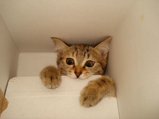 Animal My Cat ❤ In The Box Funny Pics