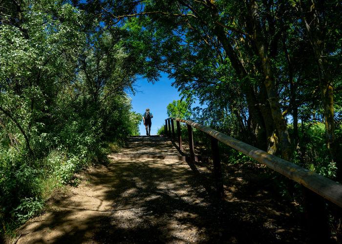 Tree Shadow Full Length Walking Sky Hiker Hiking Pole Hiking Backpack Explorer Mountain Climbing Rock Climbing Trail Stairway Steps Footbridge Hand Rail Clambering