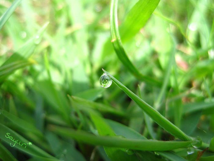 Drops 雫 Green