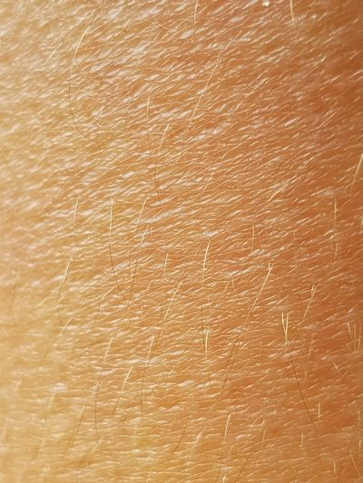 Skin detail Skin Detail Skin Detail Backgrounds Pattern Close-up Abstract Pores Hair Body Part Macro Macro Photography Textures And Surfaces Surface Background Texture Orange Color Dermatology Dermatologia Derma Dermatological Epidermis Medicine Medical