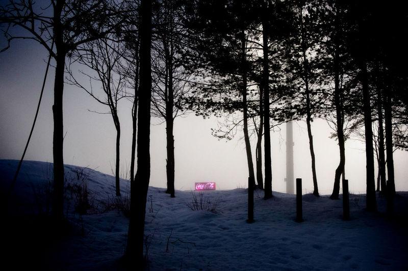 Holmenkollen, Oslo Holmenkollen Norway Oslo UNPOSED Beauty In Nature Coca Cola Forest Mystery Nature Night Scenics Snow Tree
