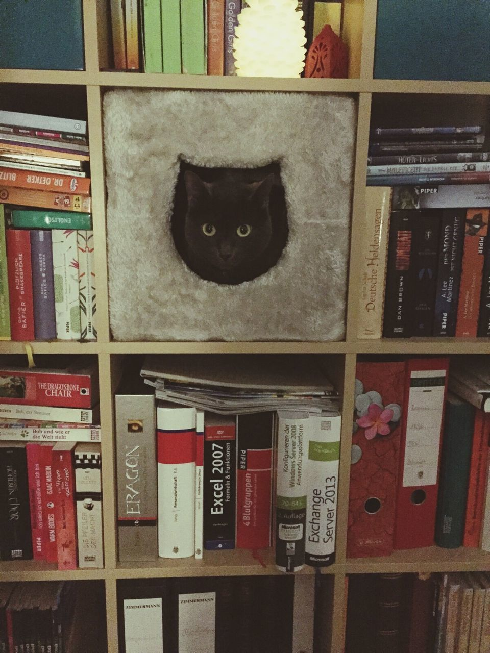 pets, indoors, domestic animals, domestic cat, cat, animal themes, window, one animal, looking at camera, portrait, black color, feline, shelf, no people, mammal, red, home interior, architecture, built structure, day