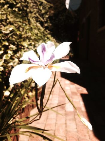 The Power of a Flower. Getting In Touch Enjoying The Sun Relaxing Tocamepicture