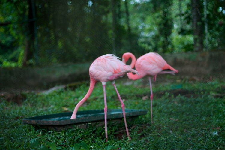 Agua Animal Themes Animals In The Wild Beak Beber Beginnings Bird Botany Close-up Composition Day Flamingo Focus On Foreground Growing Growth Nature One Animal Perspective Positive Seductive Side View Two Animals Wildlife