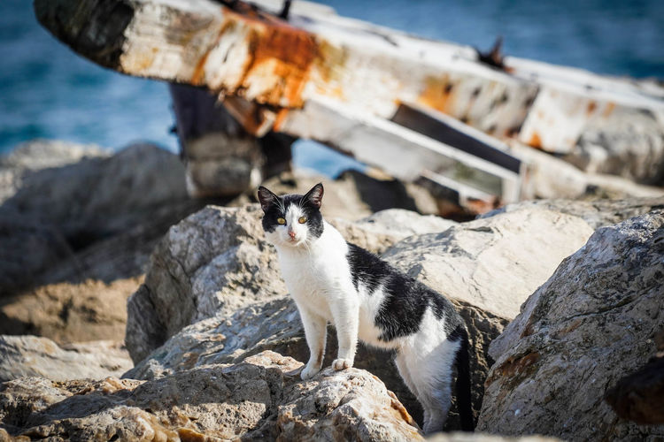Full length of cat standing on rock by sea